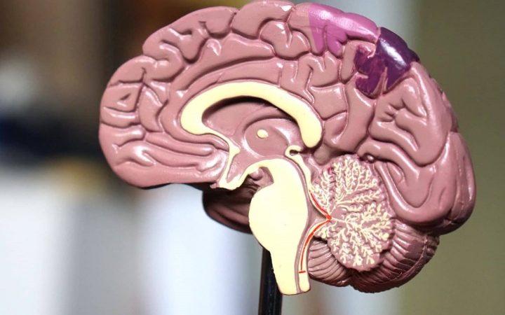 Best Brain Model